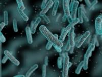 Baktérie sú čoraz odolnejšie. Ktorých sa najviac obáva WHO?