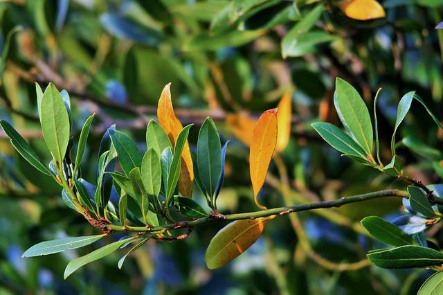 leaves_315725_640